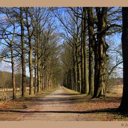 Bomen op een rij....