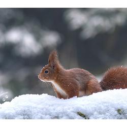 Snow.....Squirrel....Snow
