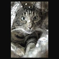 kat in a bag