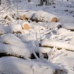 besneeuwde houtstapel