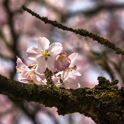 Eindelijk lente.