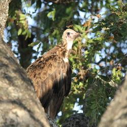 Jong op het nest