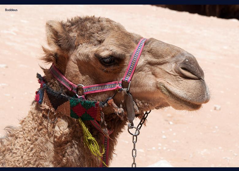 kameelkop 1505192299m1w - voor personenvervoer