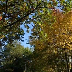 Herfst in Gijzenrooij