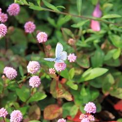 Japan vlinders en bloemen