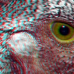 Chicken eye Lumix 3D