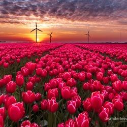 Sunrise in Flevoland