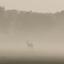 Ochtendmist in de Kalahari