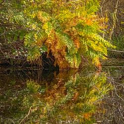 Varen in herfstkleuren