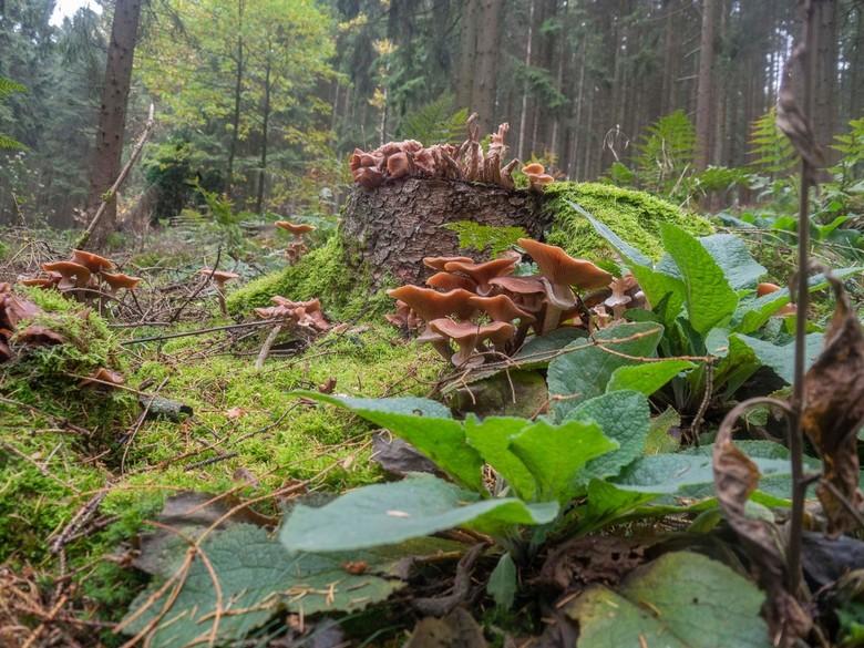 _A260067 - Herfst in het Sauerland