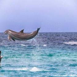 Dolfijn bezoek