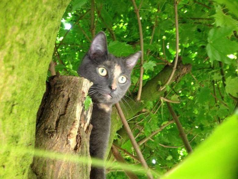 """Poes in boom - Trots op mijn kat in de boom <img  src=""""/images/smileys/smile.png""""/>"""