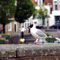 The Horn of Plenty and the Seagull