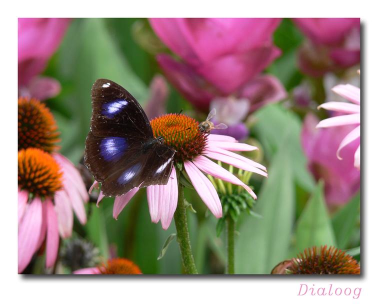 Dialoog... - De (gebroken) vlinder was mijn onderwerp, pas toen ik de foto's op groot scherm bekeek zag ik dat hij in gesprek wasmetr de wesp. Ge