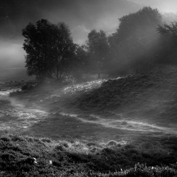 Mist Veluwezoom