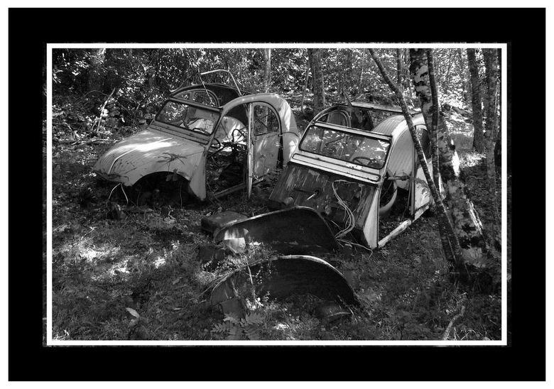 Wilde eenden - Tijdens een offroadrit in Zuid Frankrijk kwamen we een aantal eenden tegen midden in het bos.<br /> Hoe ze er gekomen zijn ????