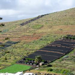 Lanzarote 17 - omgeving Los Valles