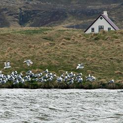 IJsland 85