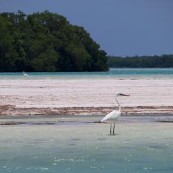 Watervogel in de zee