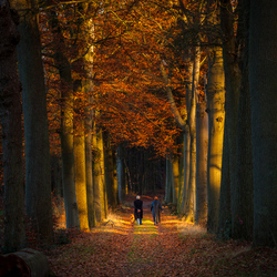 An Autumn Walk