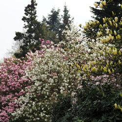 Lente bloei