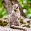 Poserende eekhoorn
