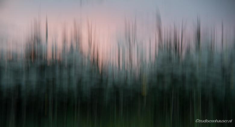 IMG_8621 - Weerspiegeling van het laatste licht van een zonsondergang gespiegeld in onze buursloot. De omhoog beweging en het riet zorgt voor het abst