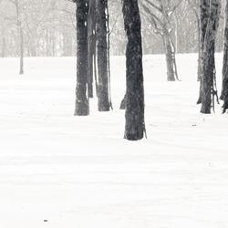 Winters landschap in Limburg