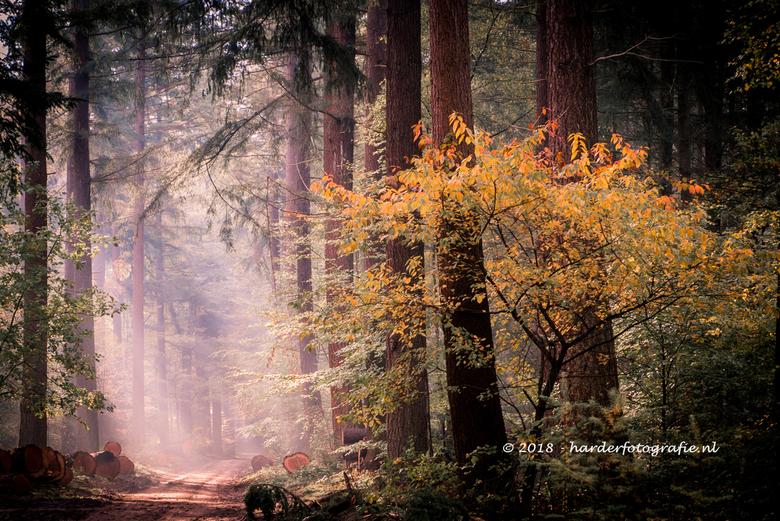 Licht in het donkere bos - Herfsttinten in het Speulderbos. Met in de achtergrond de zonnestralen die het bos wat oplichten<br />