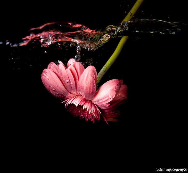 waterbloem roze1