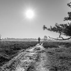 Pieterpad wandelaar op het Ballooerveld (Drenthe)