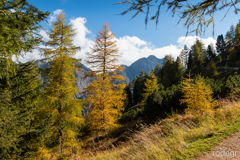 Stubaital Herfstkleur.jpg - Het begin van de herfstkleur boven bij de Elferlift in het Stubaital, Oostenrijk