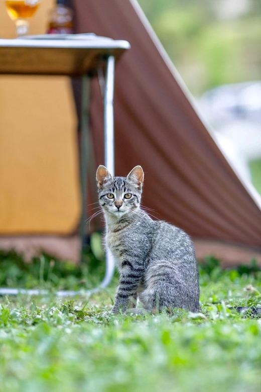 Kiwi t campingkatje - Kiwi was vanuit de bergen komen aanlopen op de camping in Frankrijk. Het was een klein katje dat blij was met aandacht (en eten)