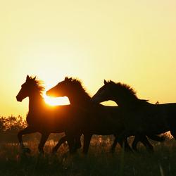 Paardenspel