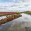 Zeekraal in De Kwade Hoek