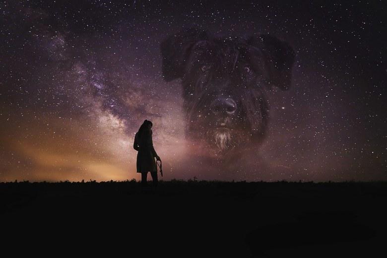 A star in heaven - Composite van 6 foto's. Voor de melkweg in het midden is een foto van unsplash, gemaakt door Nathan Anderson, gebruikt als beg