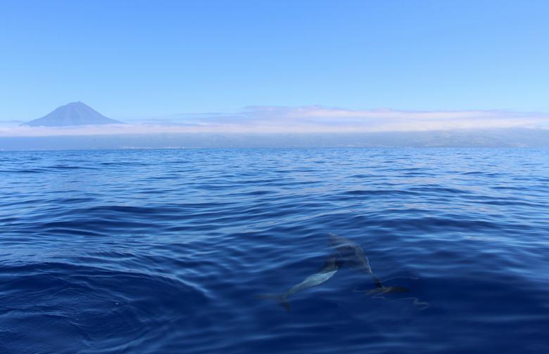 view with dolphins.jpg - Op een bootje voor het eiland Pico in de Azoren, samen met een koppel dolfijnen.jpg