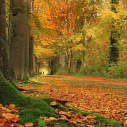 Herfst op landgoed Weldam