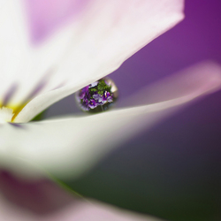 CAPTURED IN A DROPLET