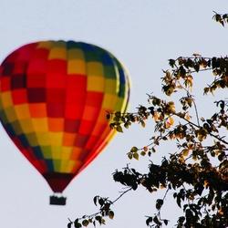 Ballon achter boom