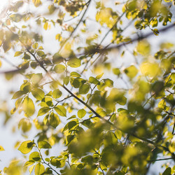 Door de bladeren de zon zien.