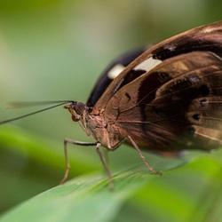 vlinder in de Orchideeenhoeve