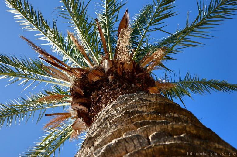'Palmboom' - Andere manier van palmbomen fotograferen; liggend op de grond met je camera omhoog gericht, haha. Ben benieuwd wat jullie ervan vinden!