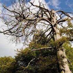 Tree into the bleu sky