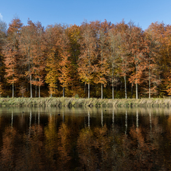 reflection of autumn colors