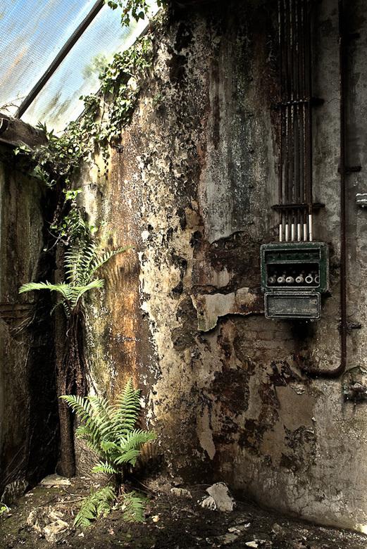 Muur met stoppenkast en wildgroei in verlaten oude fabriek - Muur met stoppenkast en wildgroei in verlaten oude fabriek