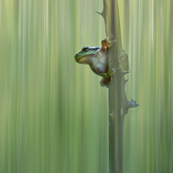 Froggyday