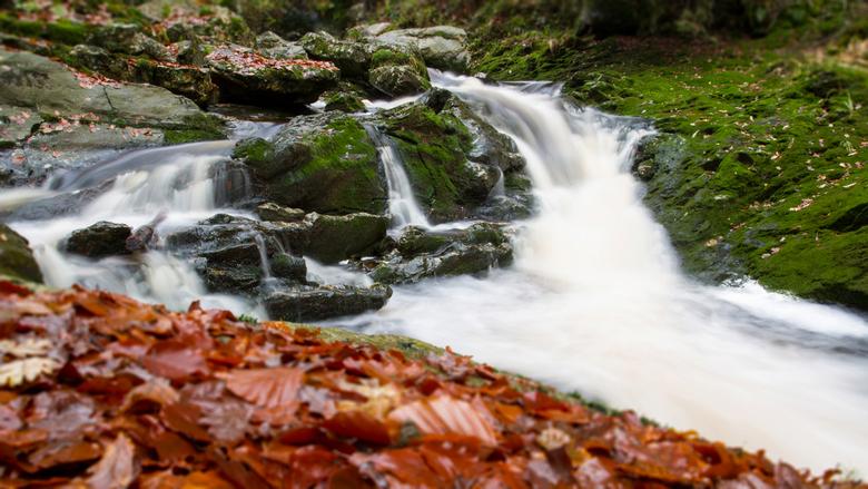 Le ruisseau... - Afgelopen weekend een wandeling gemaakt in het prachtige natuurgebied bij Hockai (BE).<br /> Je waant jezelf ergens in Alaska langs