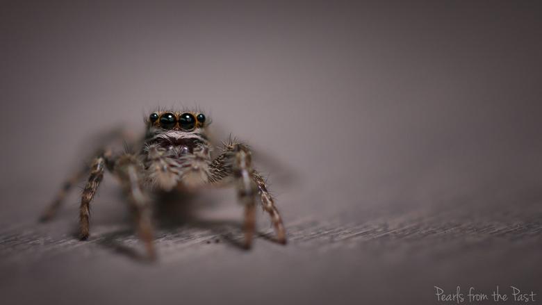 Itsy bitsy spider - Een klein spinnetje in de tuin.