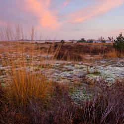 drunense duinen vanochtend
